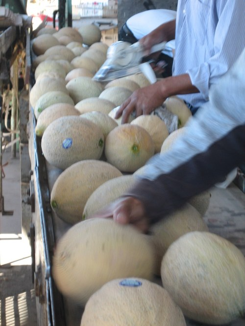 Melons for Market